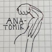 A1 Anatomie