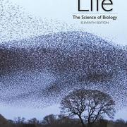 Life: The Science of Biology 11th Edition