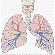 Respiratory JC