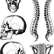 LCRS Y2: Anatomy of the head, neck and spine