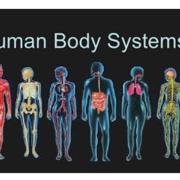 Human Bio - unit 2