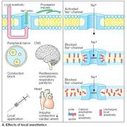 Anestesi TP5FAN(tandläkarprogrammet GU)