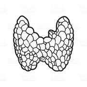 Endocrine Rafi