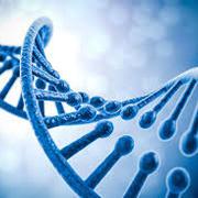 GCSE Combined Science: Biology (Higher)