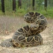 Reptiles and Amphibians of Georgia