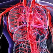 CVS- Cardiovascular