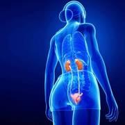 KBF- Kidney and Body Fluids