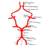 Anatomy - Head and Neck