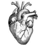 1MB Cardiology - Rafi Ahmed