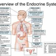 6 ENDOCRINE