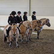 Aktivitet med Hest