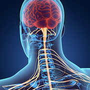 6- Neuro Diag
