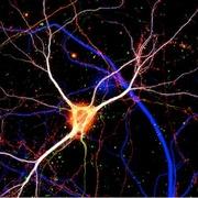 Neuroscience kopi