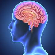 Neuropsyciatry