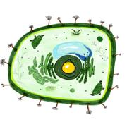 Biologi1