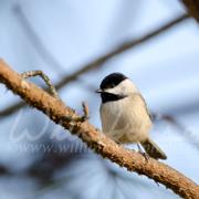 Common Birds of Georgia