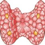 Clin Med II - Endocrine