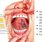 Regional Anatomy (Head And neck)