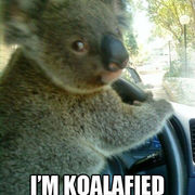 Iphone 3x retina dont worry im koalafied