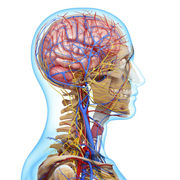 Head, Neck and Neurological Systems