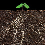 RHS L2 R102 Plant Nutrition and the Root Environment