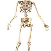 BIO 2310 - Exam 2 (Bones)