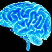 Iphone 3x retina researchers recreate 17000 year brain child 1