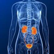07- Renal and Urology
