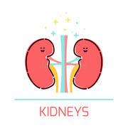 Iphone 3x retina kidney cartoon icon cute healthy kidneys made style kidneys character human body organs anatomy medical human internal 72896325