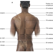 Manifestation clinique - système nerveux