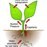 Biology OCR (9, transport in plants)