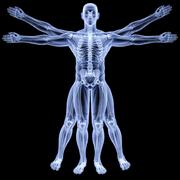 Anatomy (Truman)