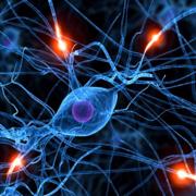 Sem 4 - Nervous System
