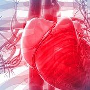 Adele Cardiovascular