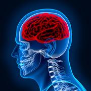 Neuroanatomia - Teórica