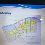 Ortopedia Pediatrica - LP