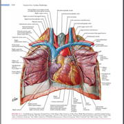 Cardiac Anatomy, Procedures, And Techniques