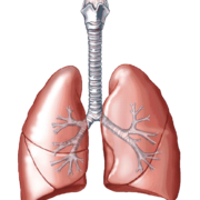 Iphone 3x retina lungs png clipart