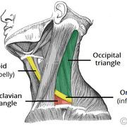 Iphone 3x retina occipital triangle