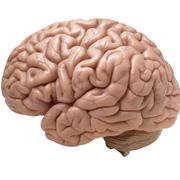 Neuro II Exam I