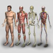 Anatomia (BMF)