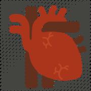 (2) Cardio
