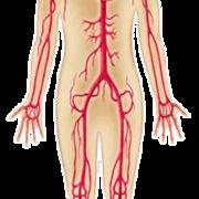 Y2 Dermatology Anatomy
