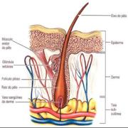 Dermatologia 4