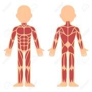 Y2 MSK Anatomy