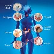 YR2 LCRS Endocrinology