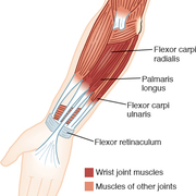 MOIANL - Wrist