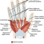 MOIANL - Hand