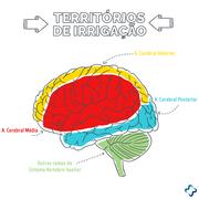 Fisioterapia Neurofuncional II