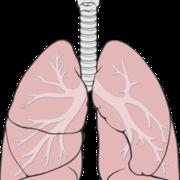 Respiratory system_S-M